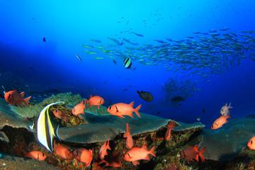 Aluminium Prints Under water School of fish on coral reef underwater