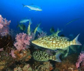 Fish underwater on coral reef