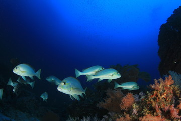 Fish underwater on coral reef