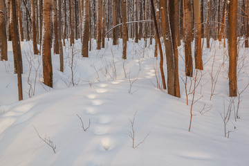 Path trail on a winter snowdrift against the background of trees