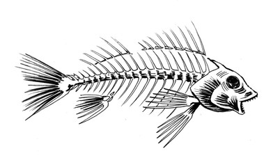 Fish skeleton. Ink black and white illustration.