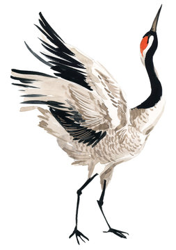 Japanese crane bird, watercolor illustration.