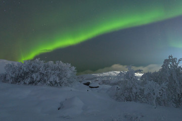Winter,snow on the trees and Aurora,Northern lights in the night sky.