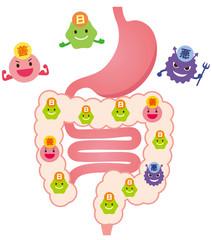腸内フローラ 善玉菌 悪玉菌 日和見菌