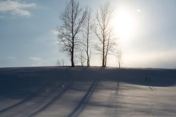 真冬の太陽と三本の冬木立