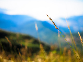 Grass on meadow and mountain view