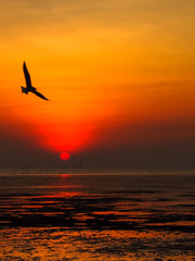Silhouette picture, seagulls with sunset in evening