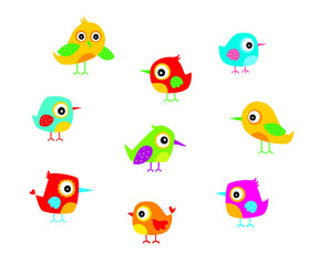 cute bird vector collection