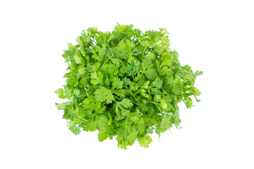 fresh green coriander leaf vegetable isolated on white background