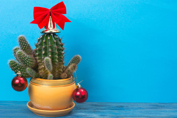 Christmas in tropical climate concept. Cactus as festive tree on bright pastel background with space for text