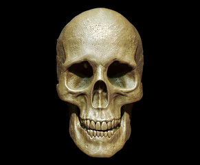 3d illustration of a skull isolated background