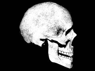 illustration of a skull isolated background