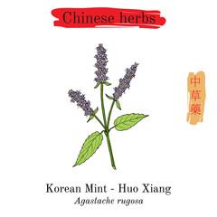 Medicinal herbs of China. Korean mint