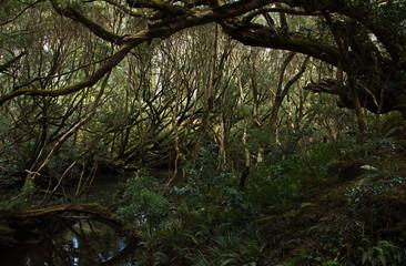 Landschaft in Bemm River Scenic Reserve