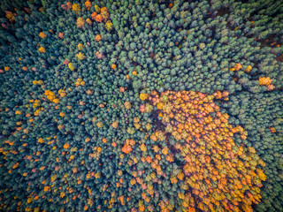 Amazing Aerial View of Orange and Green Autumn Forest, Europe, Fall Wallpaper, Horizontal Postcard