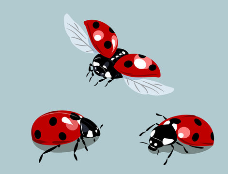 a set of images of ladybirds