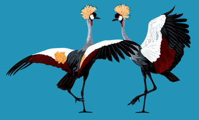 Picture of a pair of dancing Crowned shadoofs
