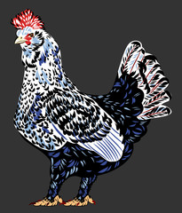 image of a beautiful chicken