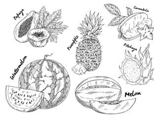 Sketched of watermelon and pitahaya fruits