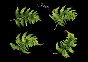 Fern realistic set