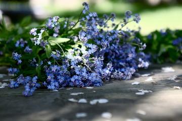 Fleurs De Wax Sur Table Blanche Buy This Stock Photo And Explore