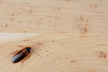 Cockroach in the kitchen. The problem is in the house because of the cockroaches.