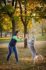 Girl playing with husky dog in city park