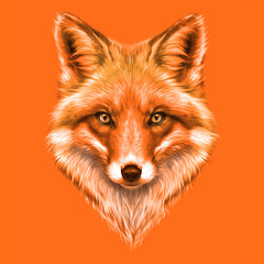 hand-drawing portrait of a a red Fox