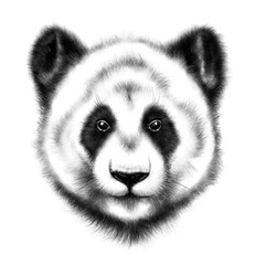 hand-drawing portrait of  a Panda