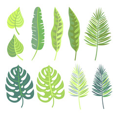 Vector collection of  tropical jungle leaves.