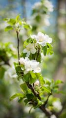 Beautiful spring flowers in beautiful spring field