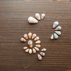 Seashell cones on wood