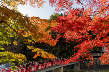Fotomurales - 紅葉美しい香嵐渓