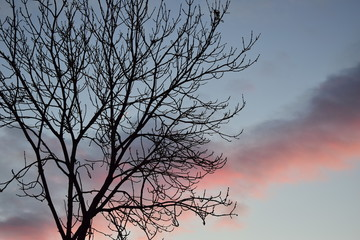 Autumn tree at sunset
