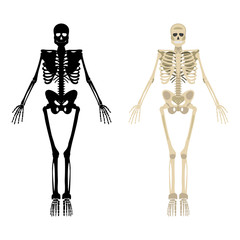 Skeleton icon. Human Skeleton front side Silhouette. Isolated on White Background. Vector illustration