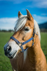 Horse Vertical Picture