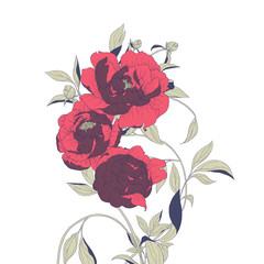 Hand drawn red Peony flowers with leaves