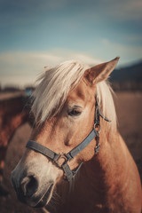 Horse Vertical Vintage Picture