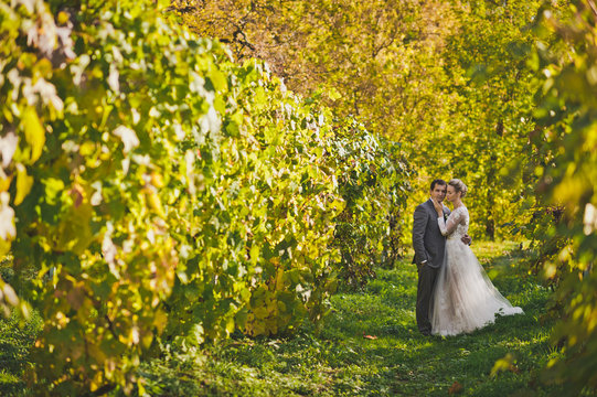 Charming bride walking amidst well-tended vines 371.