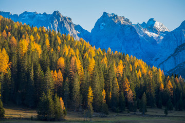 Autumn landscape in Dolomites, Italy. Mountains, fir trees and larches that change color assuming the typical yellow autumn color.