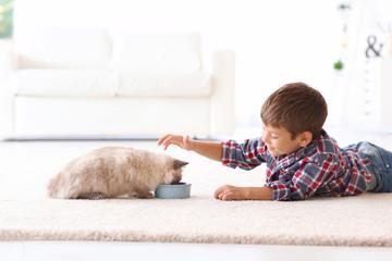 Cute little boy feeding fluffy cat at home