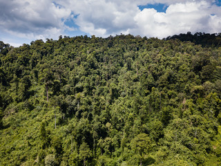 Drone view of the tree canopy of a dense, tropical rainforest