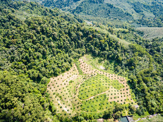 Palm oil plantations hacked out of the jungle