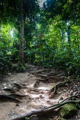 A trail through a tropical rain forest in asia