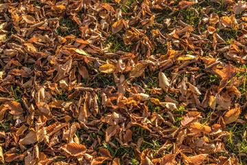 Kastanienlaub im Herbst