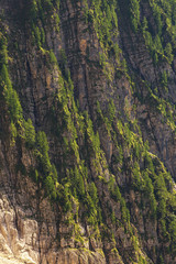 Detailed view of a rocky slope with trees
