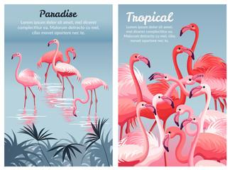 Poster Flamingo. Vector illustration.