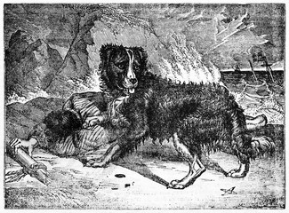 Alerted newfoundland dog and his owner lying after a shipwreck. Old Illustration by unidentified author, published on Magasin Pittoresque, Paris, 1834