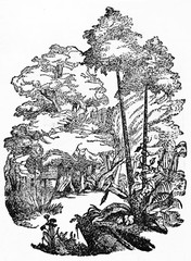 Rubber tree (Hevea brasiliensis) makes a graphic composition similar to a oval frame. Old Illustration by unidentified author published on Magasin Pittoresque Paris 1834