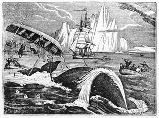 Boat tossed while whaling, ancient accident in the North Sea with an iceberg on background. Old Illustration by unidentified author published on Magasin Pittoresque Paris 1834